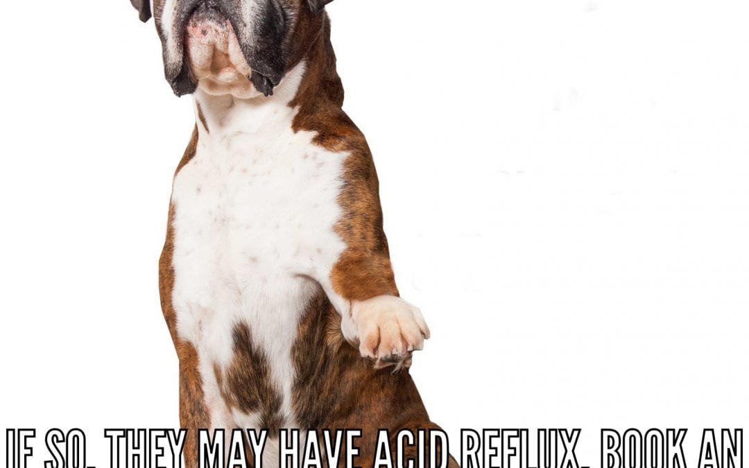 Does Your Dog Have Acid Reflux?